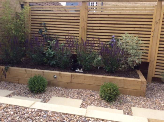 The raised bed is a nice easy way to grow plants with colour and scent; the clients cats already love them as a place to relax and play.