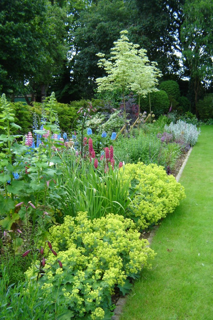 Deep borders with mixed foliage and flowering impact from Alchemilla mollis; Delphiniums and Lupins.